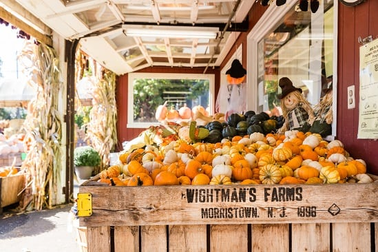 Interview with Adam Costello of Wightman Farms in Morristown